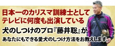 fujii-top-480x192 アメリカンエスキモードッグは可愛い犬?性格としつけ、価格は?